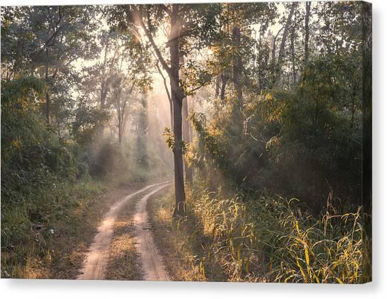 Rays Through Jungle Canvas Print