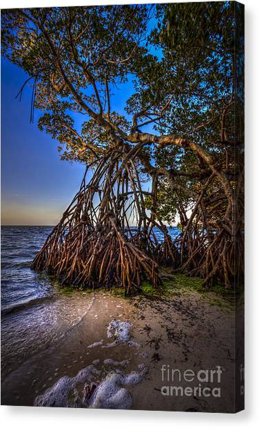 Tampa Bay Rays Canvas Print - Reaching For Earth And Sky by Marvin Spates