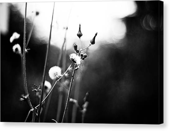 Reaching For The Light Canvas Print by  Kelly Hayner