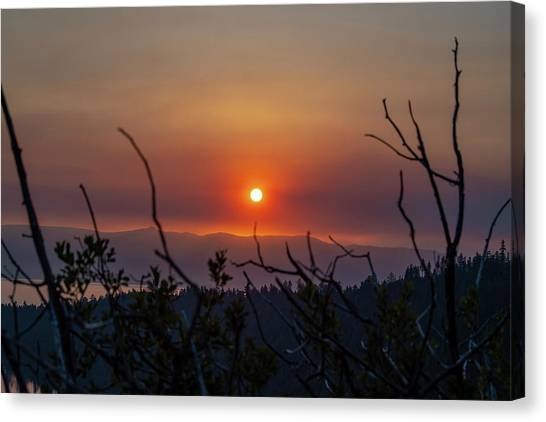 Reaching For The Sun Canvas Print