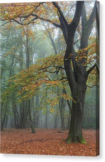 Nottinghamshire Canvas Print - Reaching Out by Chris Dale