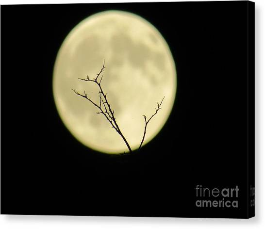 Reaching Out Into The Night Canvas Print