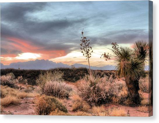 Reaching Skyward Canvas Print by JC Findley