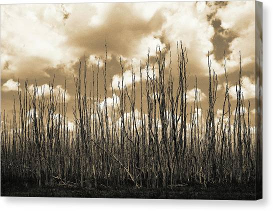 Reaching To The Sky Canvas Print
