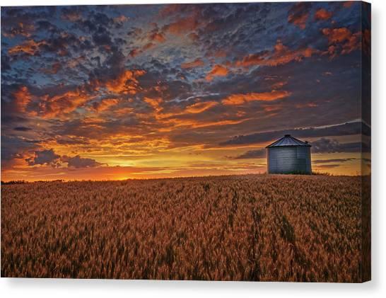 Ready For Harvest Canvas Print