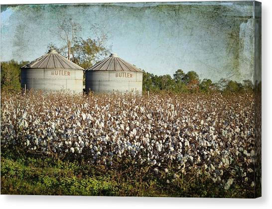 Ready For Harvest Canvas Print