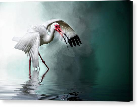 Ready Or Not, Here I Come... Canvas Print
