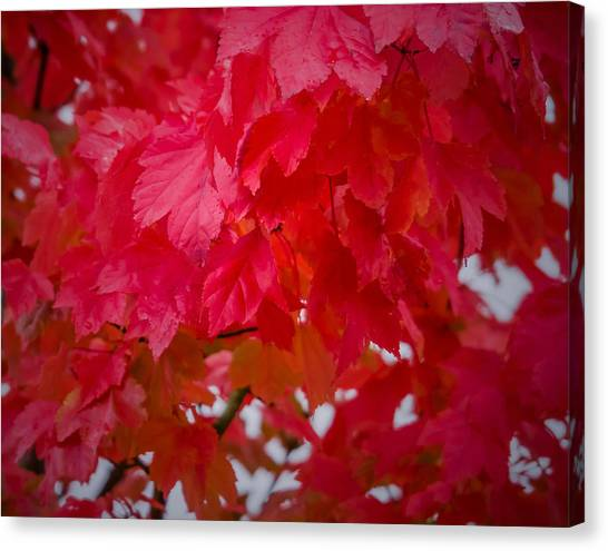 Ready To Fall Canvas Print