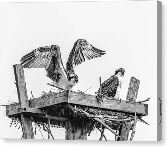 Ready To Fly Bw Canvas Print