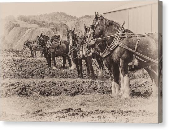 Ready To Plow Canvas Print by Joe Hudspeth