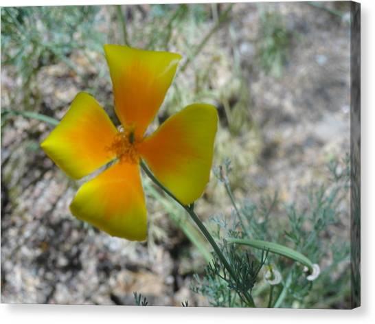 One Gold Flower Living Life In The Desert Canvas Print