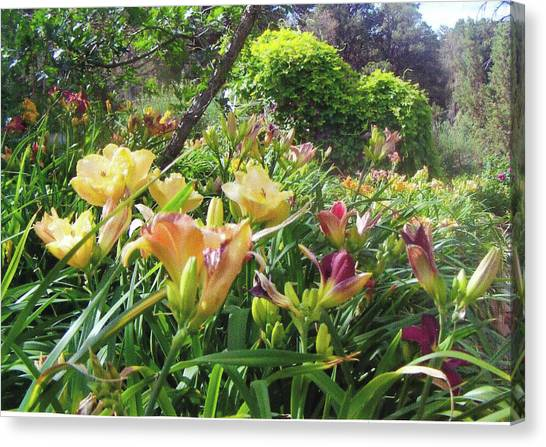Really Big Bunch Of Lilies Canvas Print by P Maure Bausch