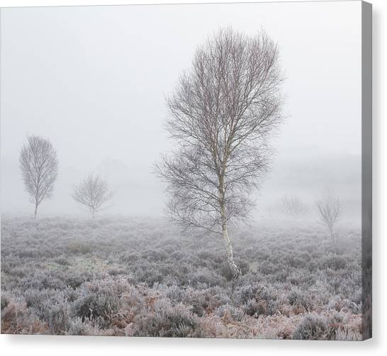 Sherwood Forest Canvas Print - Recession by Chris Dale