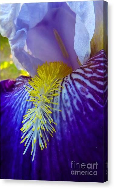 Recollection Spring 1 Canvas Print