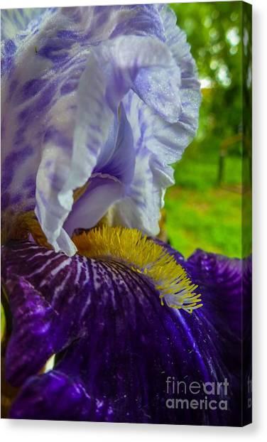 Recollection Spring 4 Canvas Print