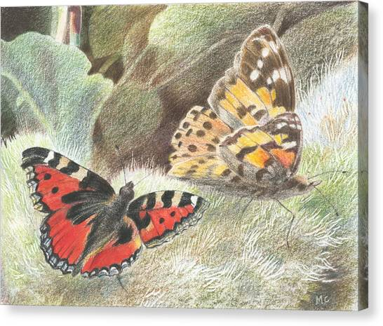 Red Admiral And A Painted Lady Canvas Print by Maureen Carter