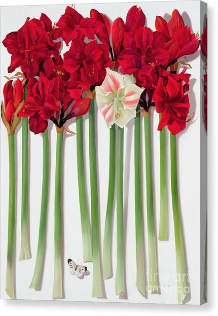 Representation Canvas Print - Red Amaryllis With Butterfly by Lizzie Riches