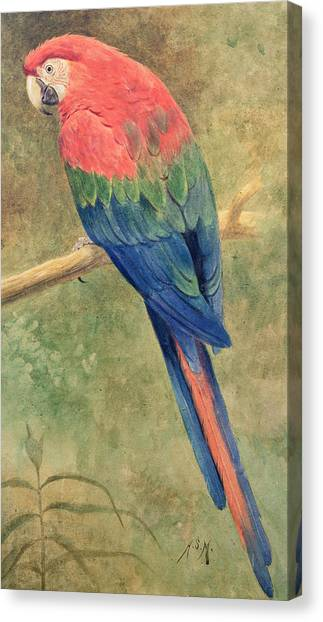 Macaws Canvas Print - Red And Blue Macaw by Henry Stacey Marks