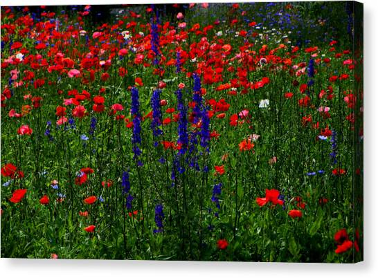 Red And Blue Wildflowers And Poppies Canvas Print by Martin Morehead
