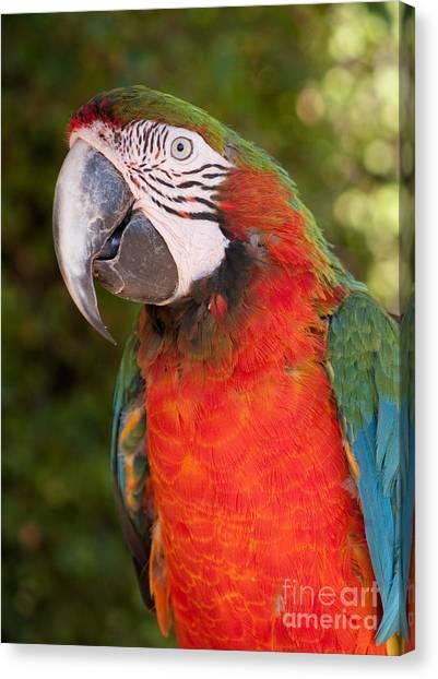 Red-and-green Macaw Canvas Print by Svetlana Ledneva-Schukina