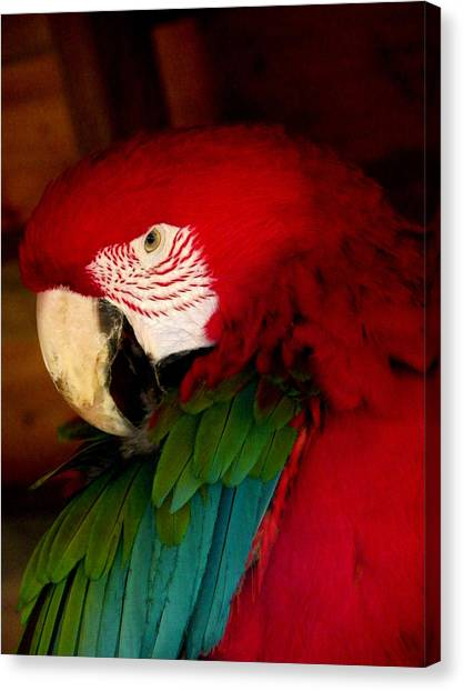 Red And Green Wing Macaw Canvas Print
