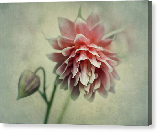 Red And Pink Columbine Canvas Print