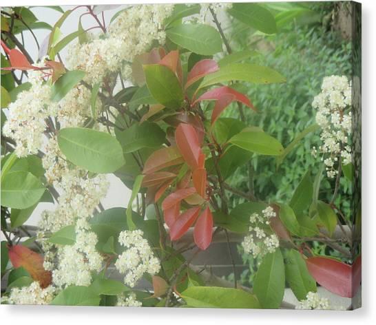 Smallmouth Bass Canvas Print - Red And White Flowers by Anamarija Marinovic