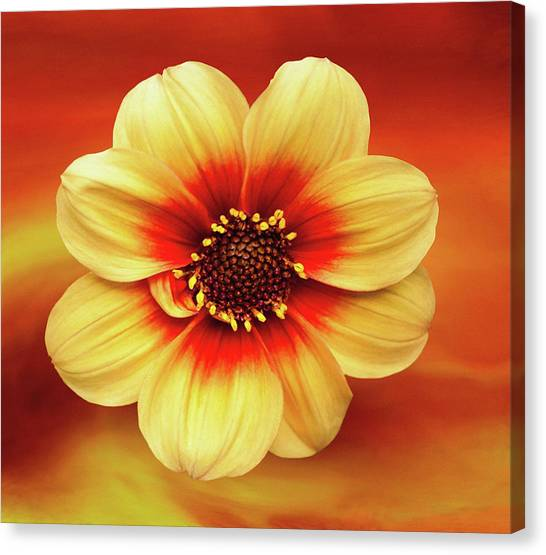 Red And Yellow Inspiration Canvas Print