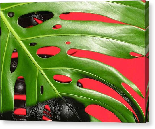 red ang green N1 Canvas Print by Evguenia Men