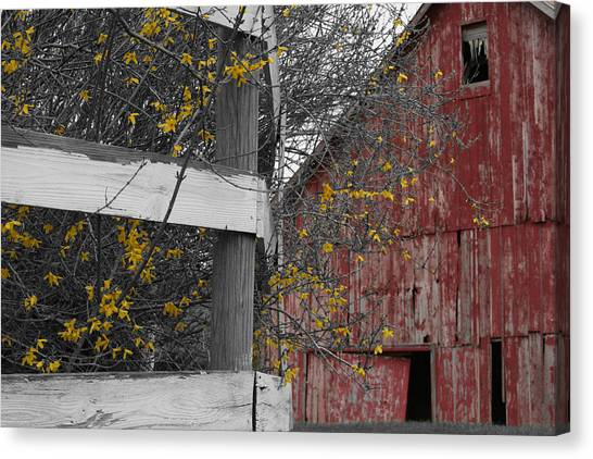 Canvas Print featuring the photograph Red Barn And Forsythia by Dylan Punke
