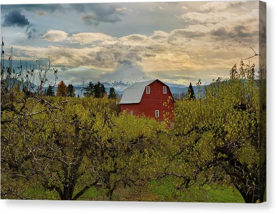 Canvas Print - Red Barn At Pear Orchard by David Gn