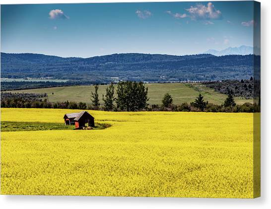 Red Barns In A Sea Of Canola Canvas Print