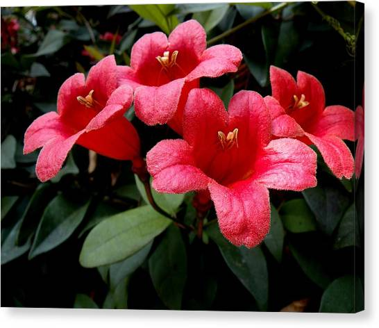 Red Bell Flowers Canvas Print by Rosalie Scanlon