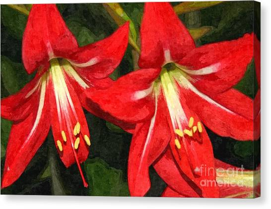 Amaryllis Lily Canvas Print