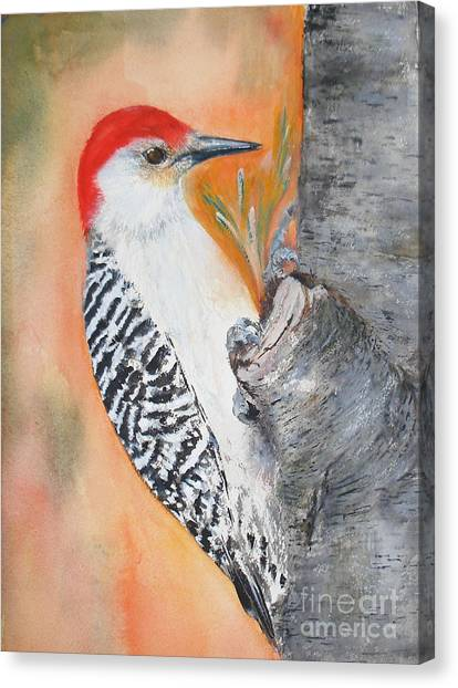 Red Bellied Male Woodpecker Canvas Print
