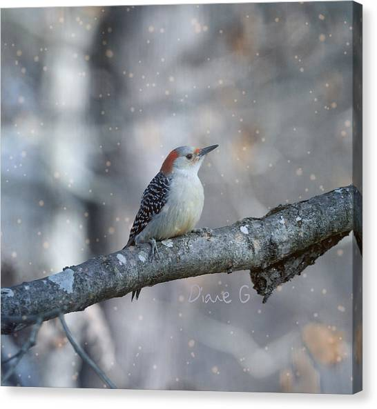 Red-bellied Woodpecker In Snow Canvas Print
