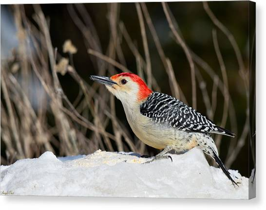 Canvas Print featuring the photograph Red-bellied Woodpecker In The Snow by Angel Cher