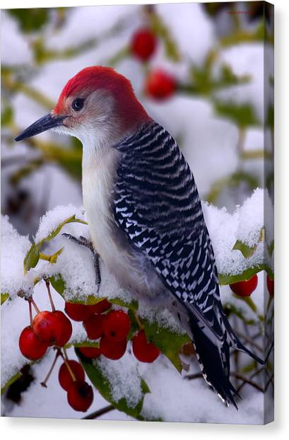 Woodpeckers Canvas Print - Red Bellied Woodpecker by Ron Jones