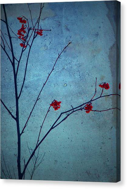 Red Berries Blue Sky Canvas Print