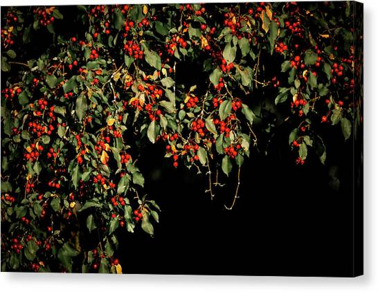 Wild Berries Canvas Print - Red Berries by Dan Sproul