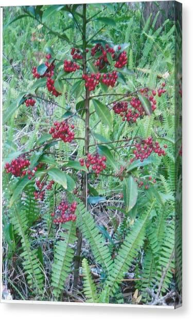 Red Berries Canvas Print by Tara Kearce