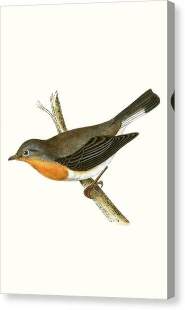 Flycatchers Canvas Print - Red Breasted Flycatcher by English School