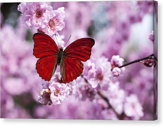 Delicate Canvas Print - Red Butterfly On Plum  Blossom Branch by Garry Gay