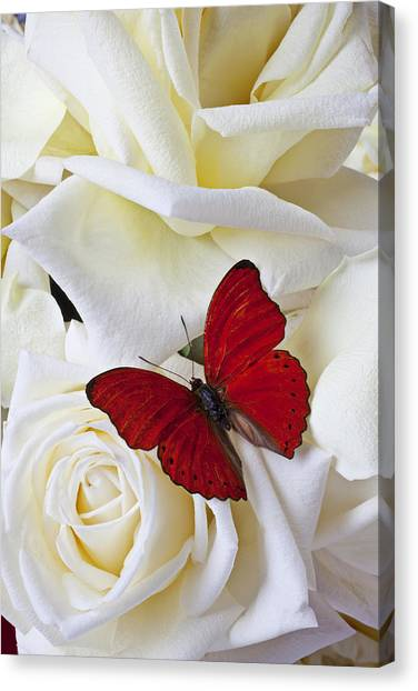Bloom Canvas Print - Red Butterfly On White Roses by Garry Gay