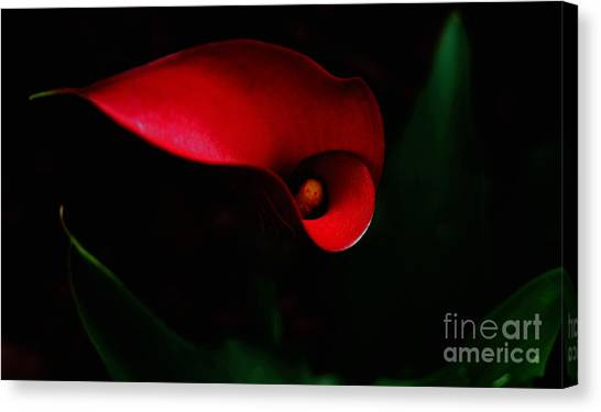 Red Calla Lilly Canvas Print