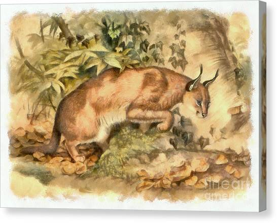 Red Caracal Canvas Print
