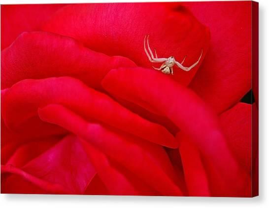 Red Carpet Canvas Print by Mark Lemon