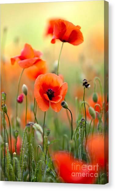 Red Poppy Canvas Print - Red Corn Poppy Flowers 06 by Nailia Schwarz