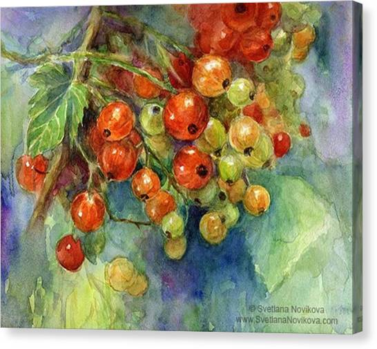 Follow Canvas Print - Red Currants Berries Watercolor by Svetlana Novikova