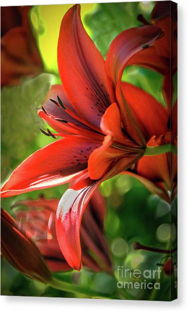 Daylily Canvas Print - Red Day Lily by Robert Bales